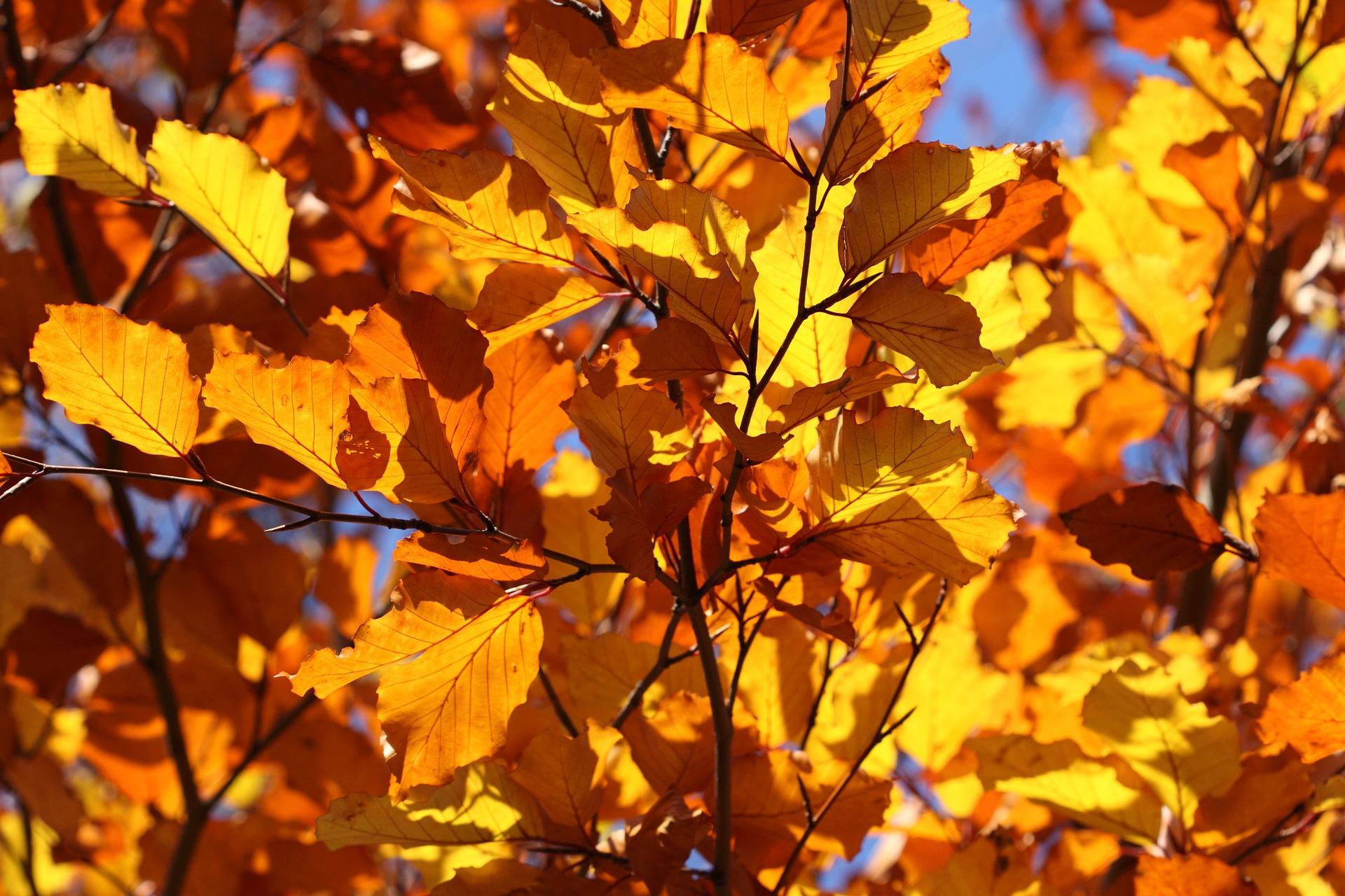 leaf-2012_1920.jpg